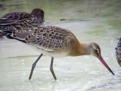 BlackWit_Dunstable_JLynch_220807