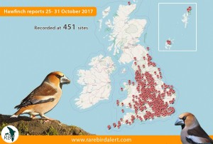 Hawfinch reports from RBA October 2017